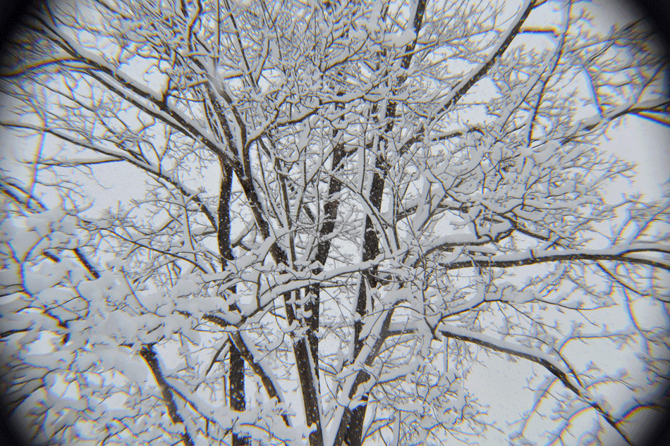 winter-tree-in-the-lens
